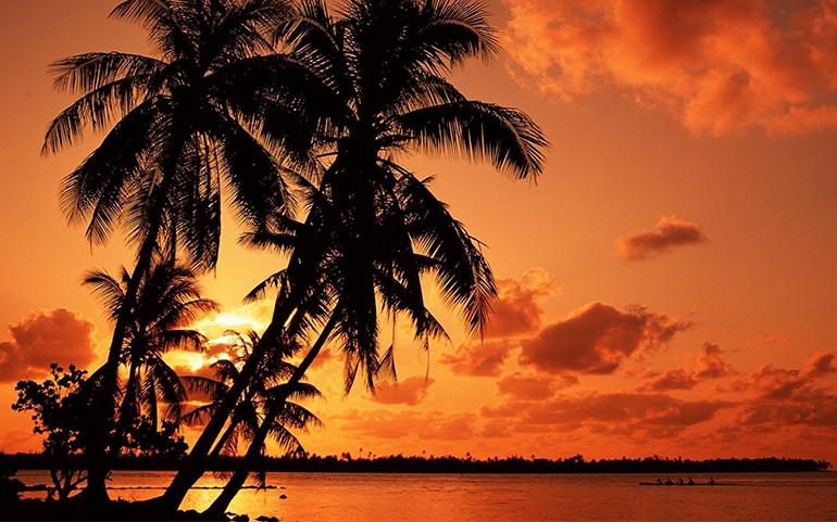 海と夕日とヤシの木の画像