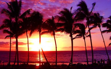 ヤシの木と夕日の画像です。